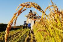 6个机会、5个难题、4个锦囊,互联网+农业保险未来可期