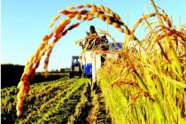 万亿市场的农业保险,互联网如何创新?