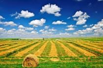 农业保险转型升级需要科技支撑
