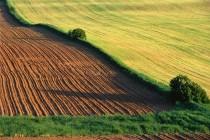 """现代农业释放千亿级利润空间,「一米信息」借助 """"保险+期货""""切入全产业链"""