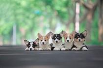 得益于五种趋势,美国宠物保险2022年市场将达到20亿美元